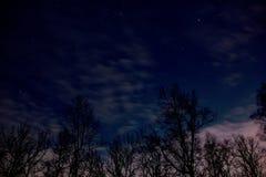 Natt mycket av stjärnor bak träden Royaltyfri Bild