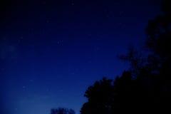 Natt mycket av stjärnor bak träden Arkivbilder