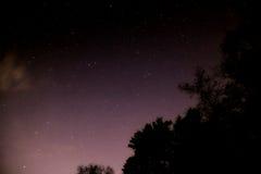 Natt mycket av stjärnor bak träden Royaltyfri Fotografi