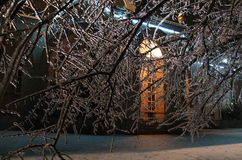 Natt och is på träd Arkivbilder