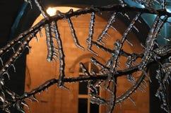 Natt och is på träd Royaltyfria Bilder
