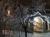 Natt och is på träd Royaltyfri Fotografi