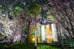 Natt Sakura Fotografering för Bildbyråer