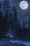Natt vinterskog i månskenet Arkivfoton