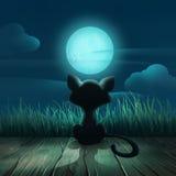 Nattbakgrund med en katt och en måne Royaltyfria Bilder
