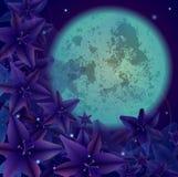 Nattblomma Arkivbild