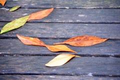 Natte bladeren Royalty-vrije Stock Afbeeldingen
