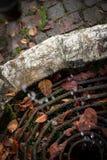 Natte bladeren Stock Afbeeldingen