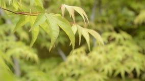 Natte bladeren in hogere linkerzijde stock videobeelden