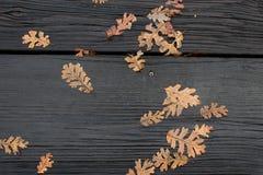Natte boom en rode bladerenachtergrond Royalty-vrije Stock Foto
