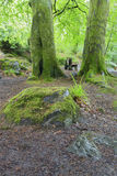 Natte boomboomstam en groen mos in bosclose-up Royalty-vrije Stock Foto