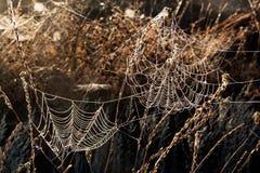 Natte die spiderweb door de zon wordt verlicht stock foto