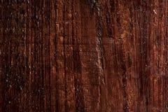 Natte donkere Californische sequoiatextuur, achtergrond Stock Afbeeldingen