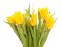 Natte gele tulpen Stock Fotografie