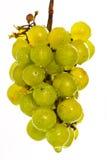 Natte groene druiven op wit Stock Afbeeldingen
