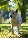 Natte hond Stock Foto