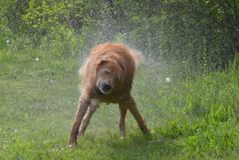 Natte hond Royalty-vrije Stock Foto