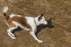 Natte hond en het spelen in zonnige dag stock fotografie