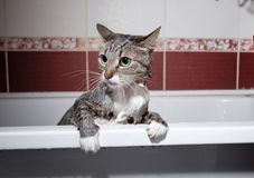 Natte kat in badkamers royalty-vrije stock afbeelding