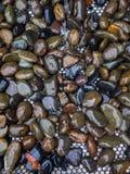 Natte maansteen Royalty-vrije Stock Foto