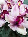 Natte orchideeën royalty-vrije stock foto