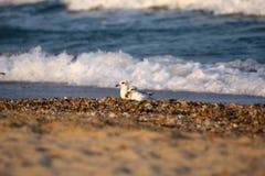 Natte overzeese stenen whith zeevogels stock afbeeldingen