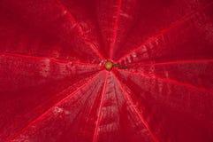 Natte rode paraplu Stock Foto