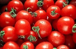 Natte rode tomaten Stock Afbeeldingen
