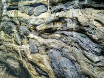 Natte rots Stock Afbeelding