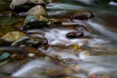 Natte rotsen in vlotte wateren in een rivier stock afbeeldingen