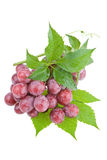 Natte sappige rode druiven Stock Fotografie