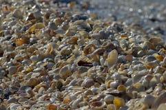 Natte shells langs het strand Royalty-vrije Stock Foto