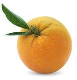 Natte Sinaasappel Stock Foto