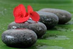 Natte steen en rode bloem Royalty-vrije Stock Foto's