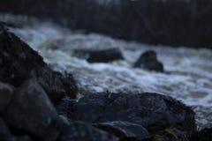 Natte stenen in de voorgrond, de lentevloed van een gewoonlijk kleine rivier in een bos in noordelijk Zweden Royalty-vrije Stock Foto's