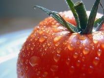 Natte tomaat in zon royalty-vrije stock foto's
