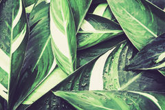 Natte Verse tropische Groene bladerenachtergrond Stock Foto