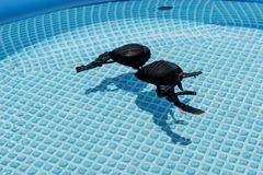 Natte vrouwelijke zwempakbustehouder of brassière die in water van zwembad drijven stock afbeelding