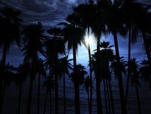 natten för den kanariefågelfuerteventura ön gömma i handflatan spain trees Arkivbild
