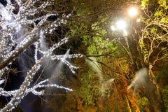 Natten Gardenasian Royaltyfria Foton
