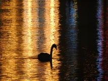 Natten i Lucerne i Schweiz, badar svanarna i vattnet som översvämmas med ljus guld- färg arkivbilder