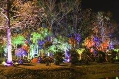 Nattfärgljus Royaltyfri Bild
