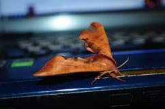 Nattfluga på bärbara datorn royaltyfri bild