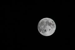 Nattflyttning Arkivfoto