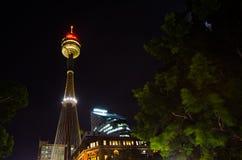 Nattfotografi av ögat för sydney centrepointtorn, sikten från Hyde Park royaltyfria bilder