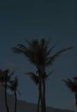 Nattfotografi av palmträd i den Kenting nationalparken Royaltyfria Bilder