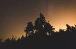 Natthimmel över kontur av träd Royaltyfri Bild