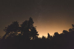 Natthimmel med stjärnor ovanför kontur för skogträd Royaltyfri Bild