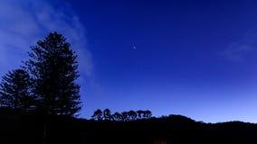 Natthimmel med trädkonturer royaltyfri fotografi