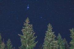 Natthimmel och träd arkivfoto